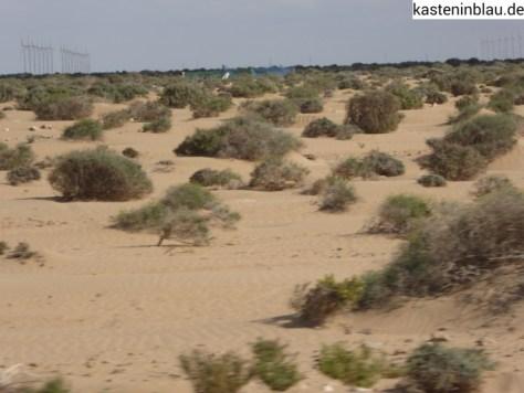 flache Sandwüsten-Landschaft