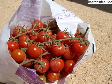 Bio-Tomaten-Beute