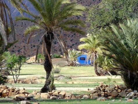 blaues Wohnmobil zwischen Palmen
