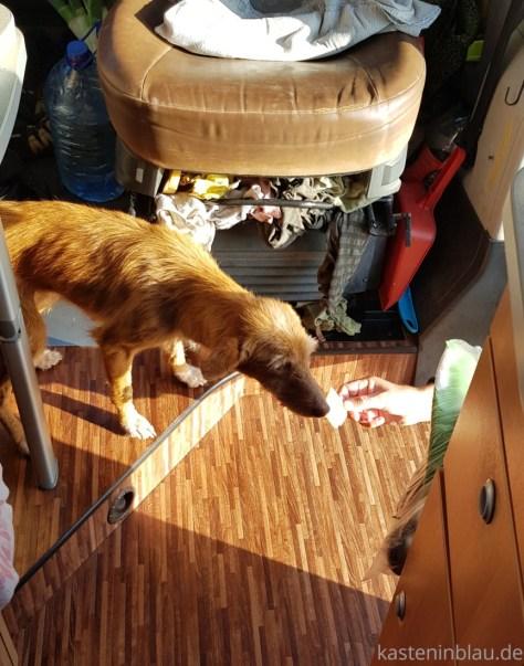 REALVANLIFE: Hund im Wohnmobil