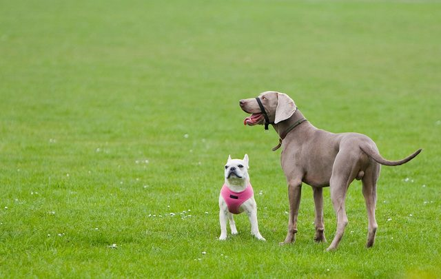 are-big-dogs-smarter-than-small-dogs