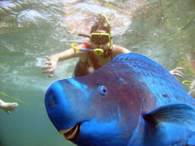 15 Amazing Animals You Would Love To Have
