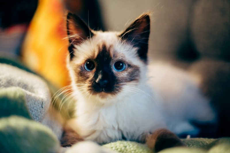 How Your Cat's Behavior Changes With Age