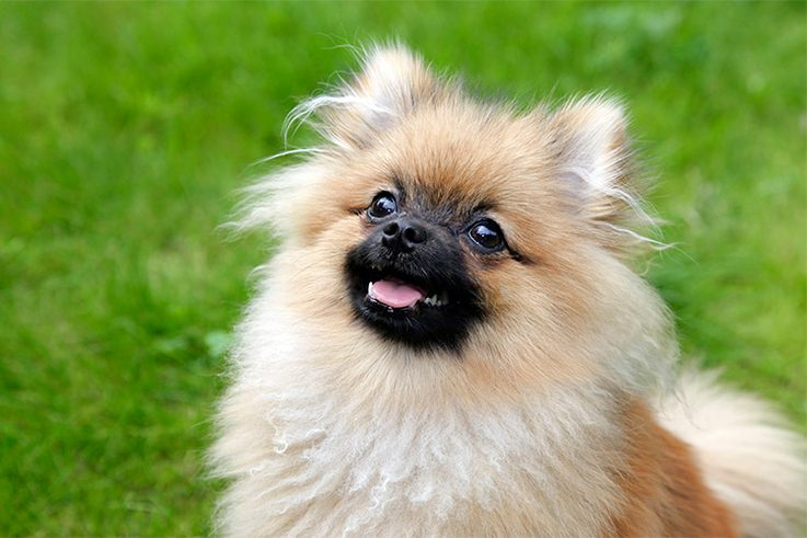 10 Best Dog Breeds For City Dwellers