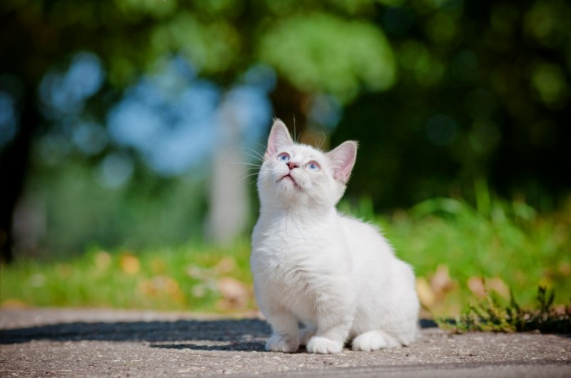 Turkish Angora Cat Breed Facts & Information
