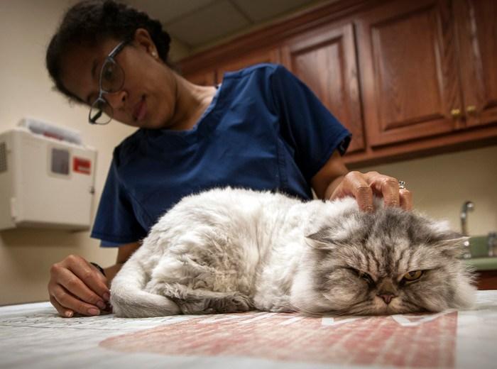Kattenvoer voor gevoelige darmen