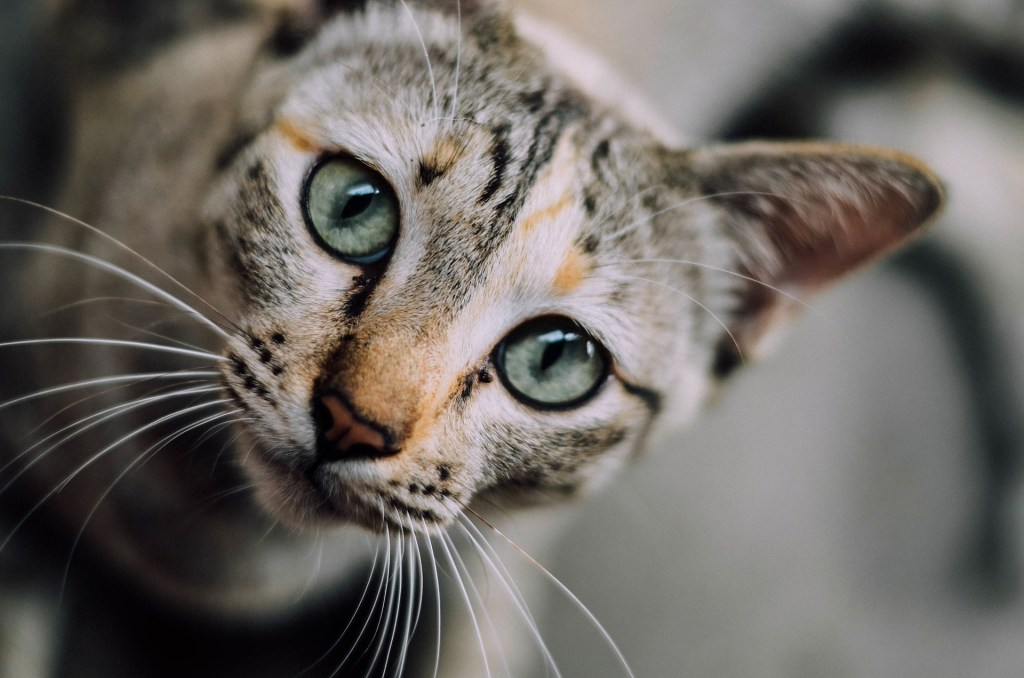 de leukste kattennamen