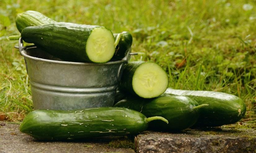 zijn katten bang voor komkommers