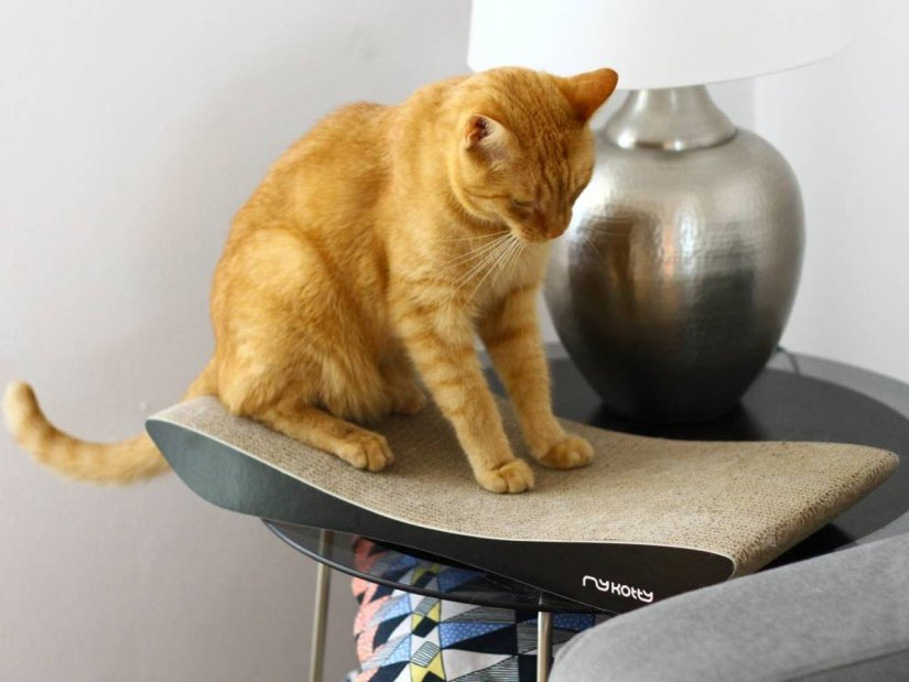 design kattenmeubel