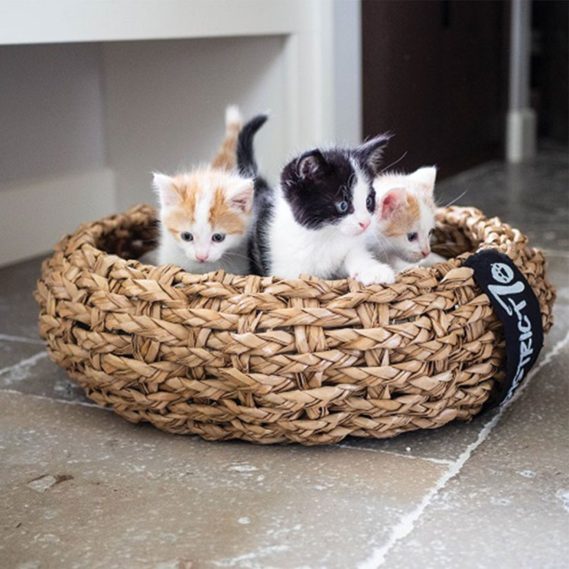Top 5 design kattenmeubels District 70 mand Cocoon
