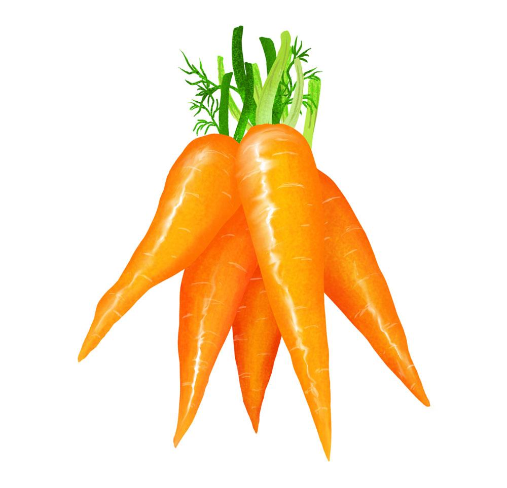 marchewki-pęczek