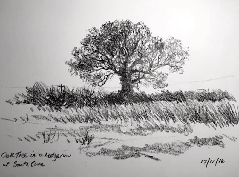 Oak tree 322