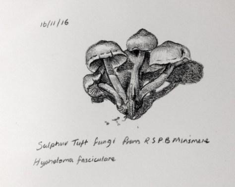 Sulphur tuft fungi 321