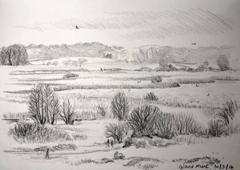 BBC Look East sketch at Minsmere