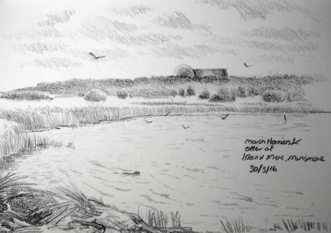 Otter and Harrier at minsmere 90