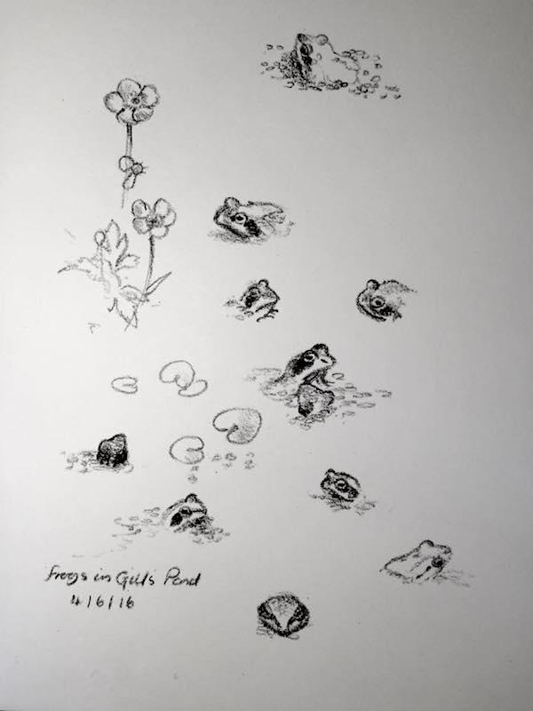 froglets sketch 156