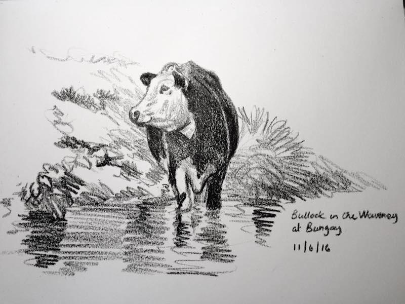 river waveney bullock sketch 163