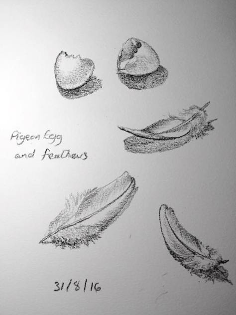 Egg and feather 234