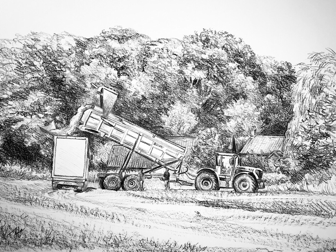 Parsley harvesting
