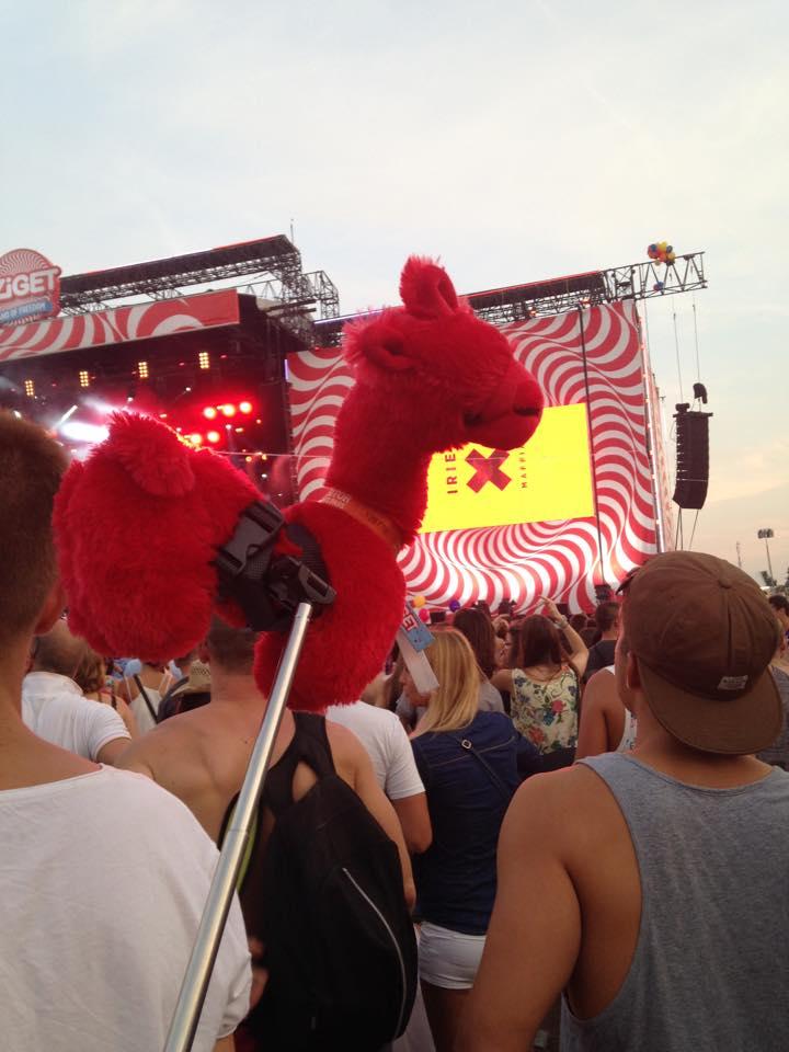 alpaca sziget concert
