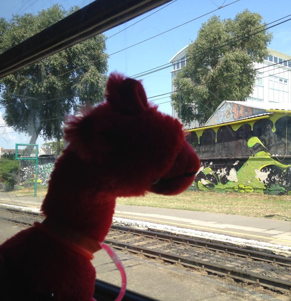 alpaca in train