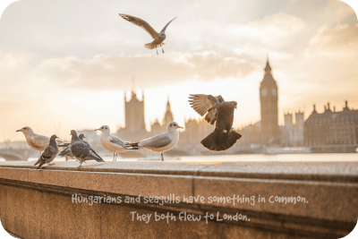 london sepia birds seagull hungarians