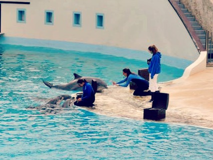 dolphin show parc asterix
