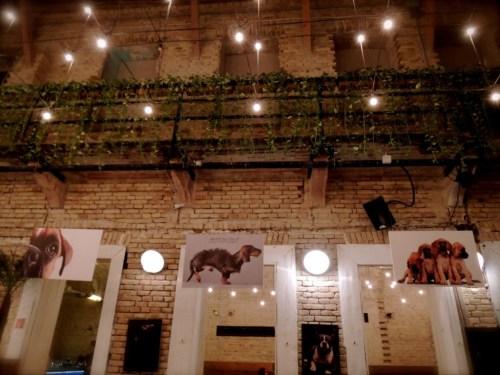 dog poster mazel tov ruin pub bar budapest flow tour