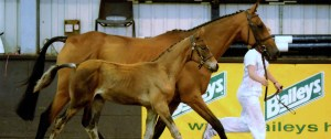 British Futurity Evaluations