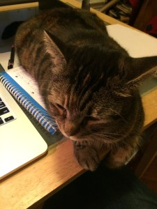New cat, keeping my writing notes warm.