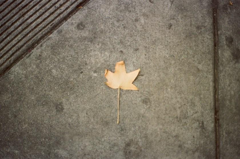 film photography of a single leaf on a sidewalk