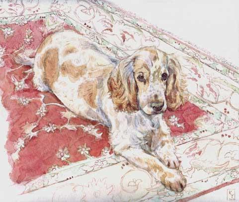 Watercolour portrait of a Spaniel