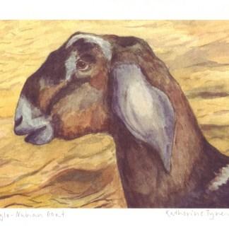 a4 anglo nubian goat fine art print