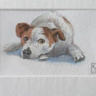 Watchful Terrier. Original watercolour painting of a Jack Russell.