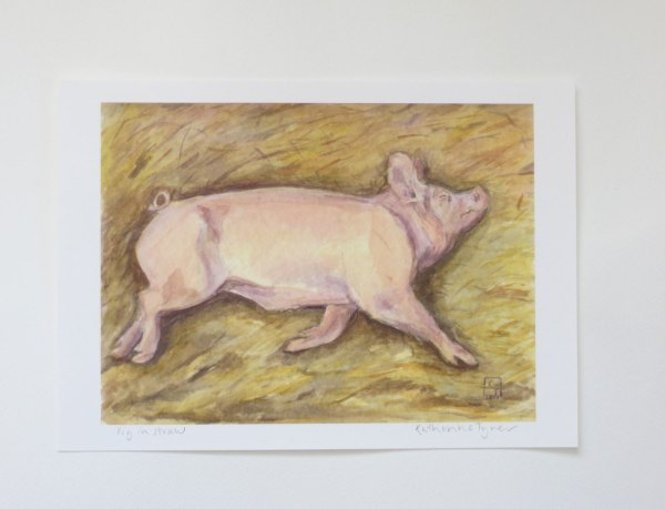 pig fine art print, pig watercolour painting