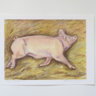 pig fine art print, pig watercolour painting