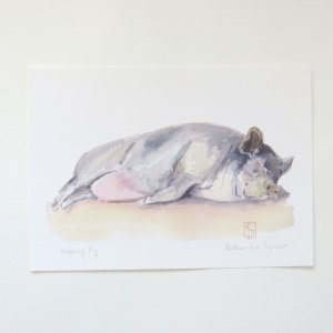 Fine Art print of a Pot-Bellied Pig, pig paintings, pig prints