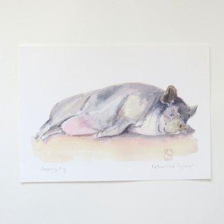 Fine Art print of a Pot-Bellied Pig, pig paintings, pig prints