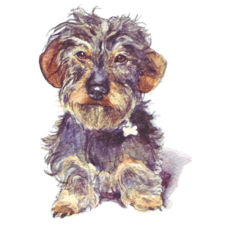 dog paintings for sale, wirehaired dachshund