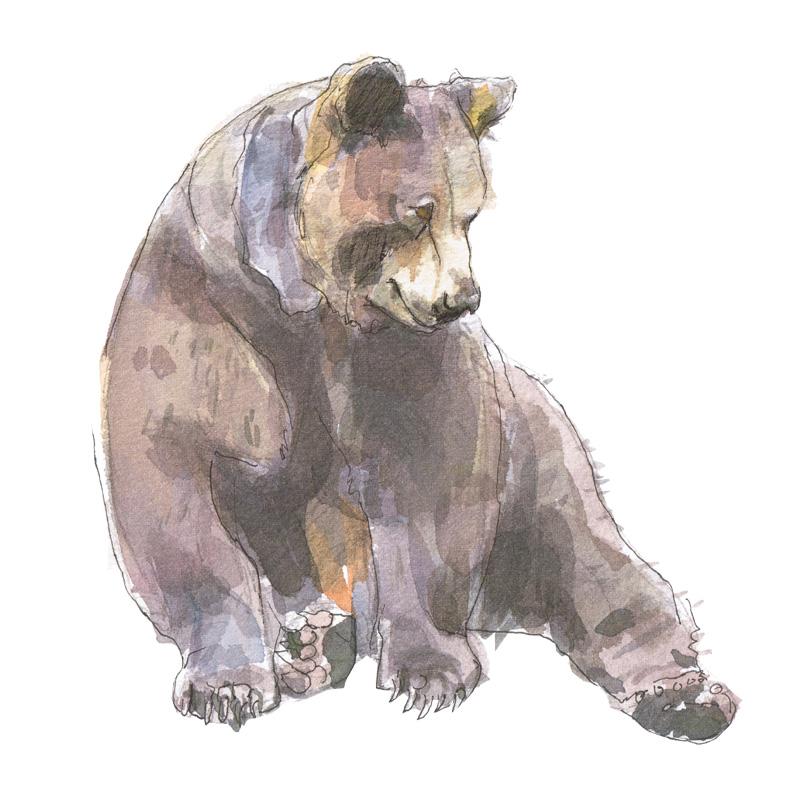 brown bear watercolour painting