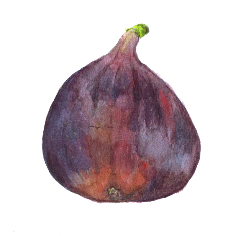 fig watercolour painting