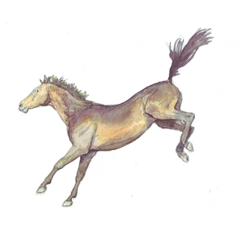 Thoroughbred horse bucking watercolour painting
