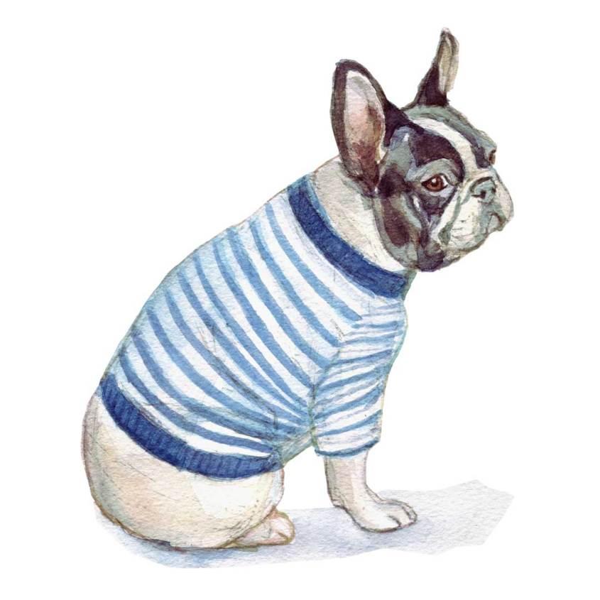 French bulldog watercolour illustration