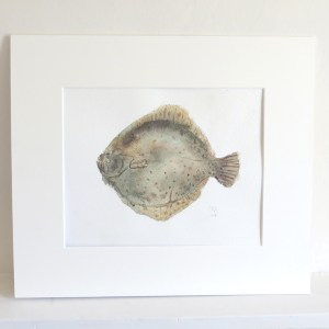 Turbot fish watercolour paintinh