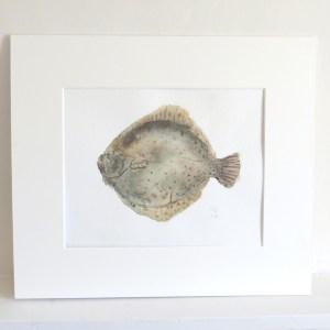 Turbot fish watercolour paintinh