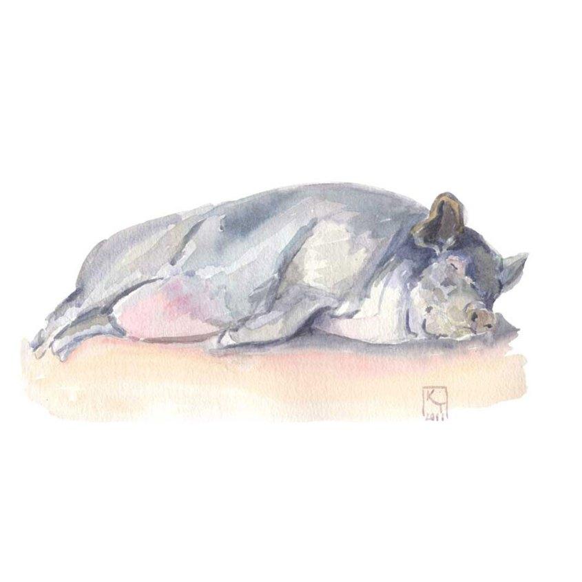 Sleeping pig watercolour painting