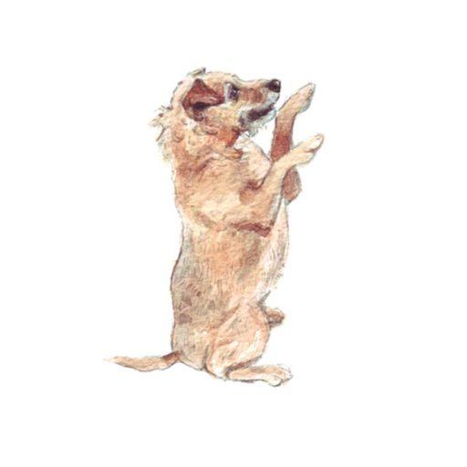 patterdale terrier illustration