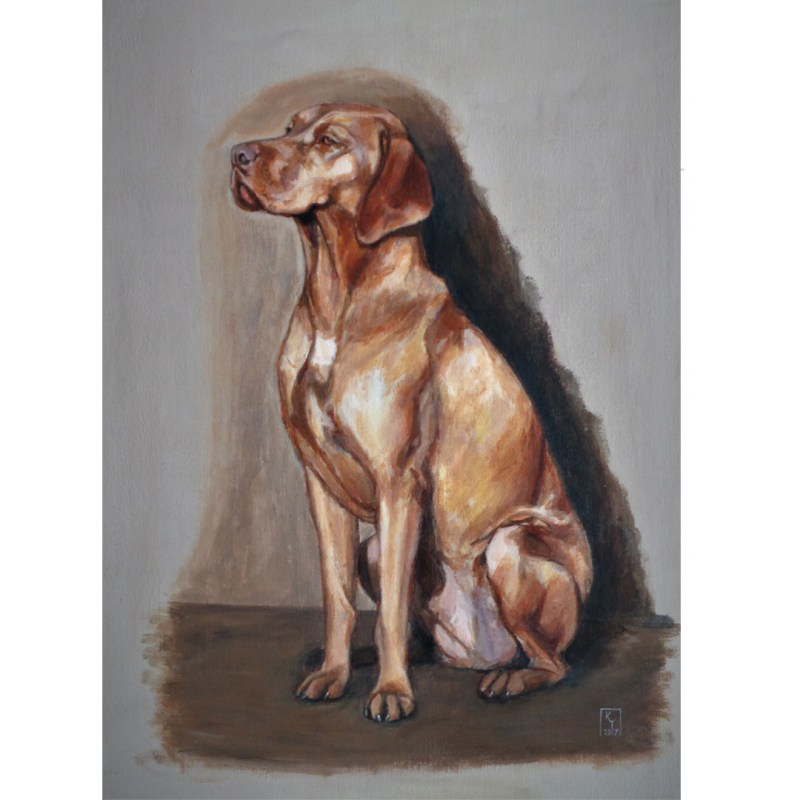 Portrait of a Vizsla dog