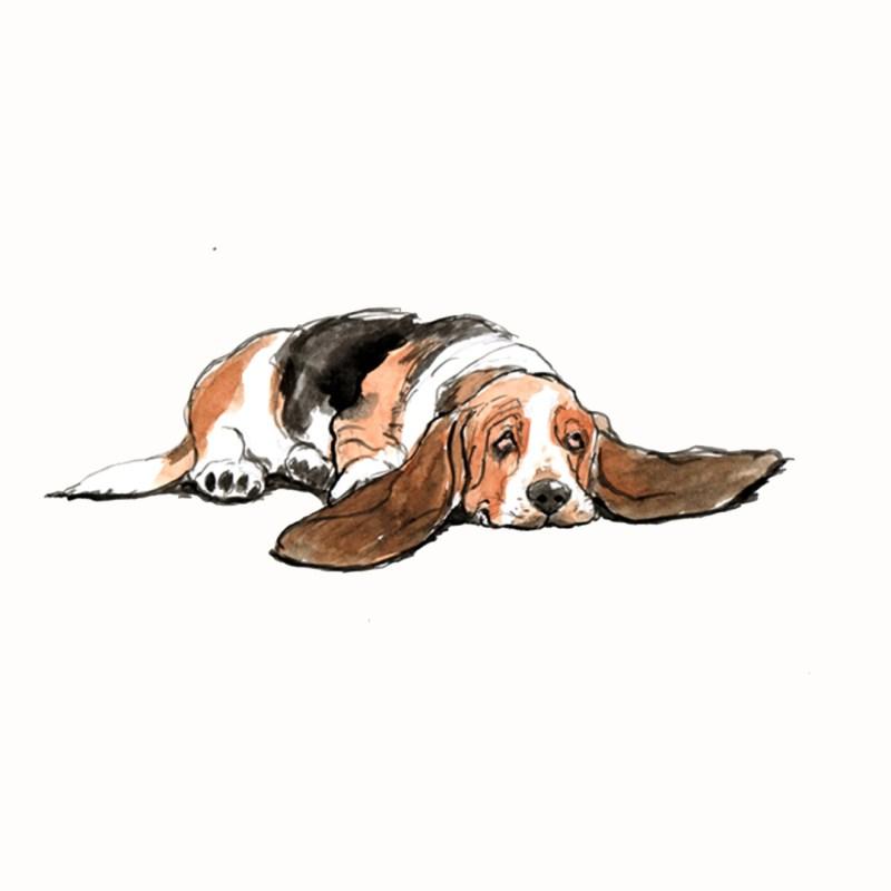 Basset Hound, watercolour illustration