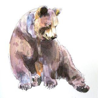 Grizzly Bear Size A4 Giclée Print